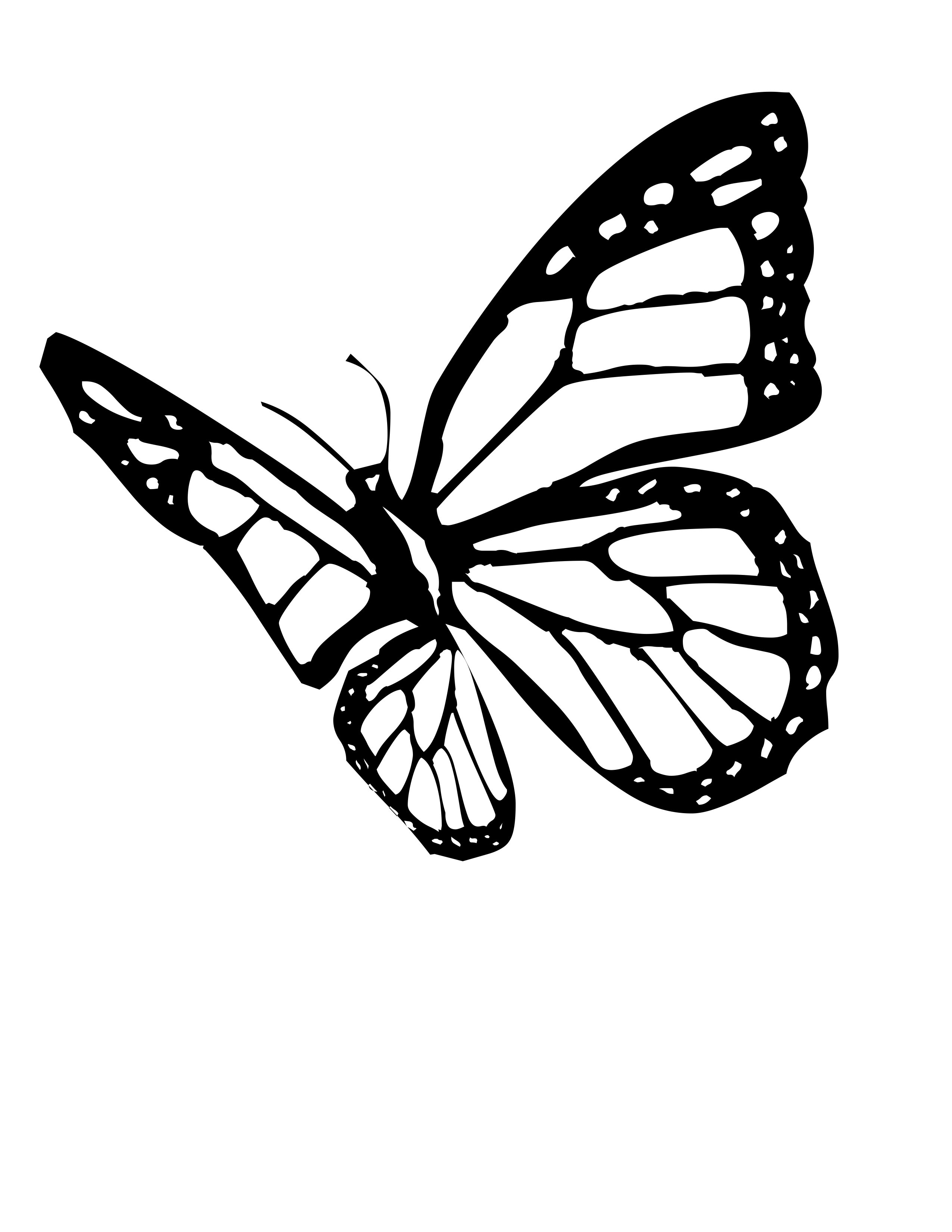 Download Free Monarch Butterfly Drawing, Download Free Clip Art, Free Clip Art on Clipart Library