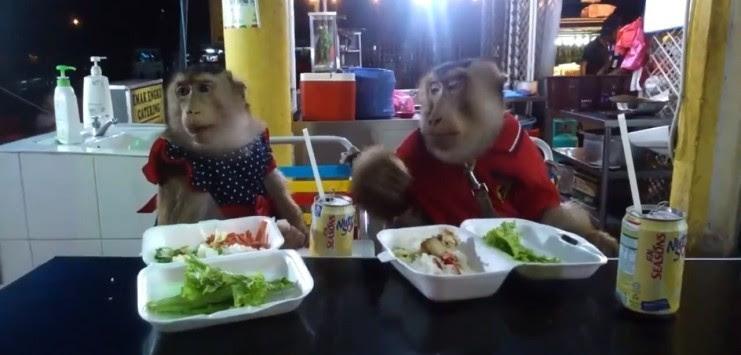 Οι μαϊμούδες τρώνε το μεσημεριανό τους ... και τα καλύτερα βίντεο της Μ. Πέμπτης