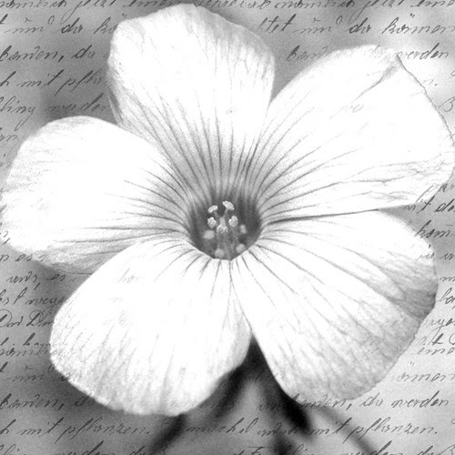 2x2flowerImage_inkjetprint_on_glosspaper