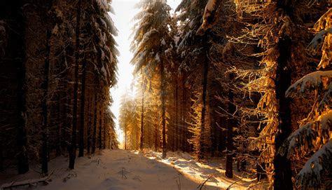 sonnenaufgang  den winterwald weithintergruende schoene