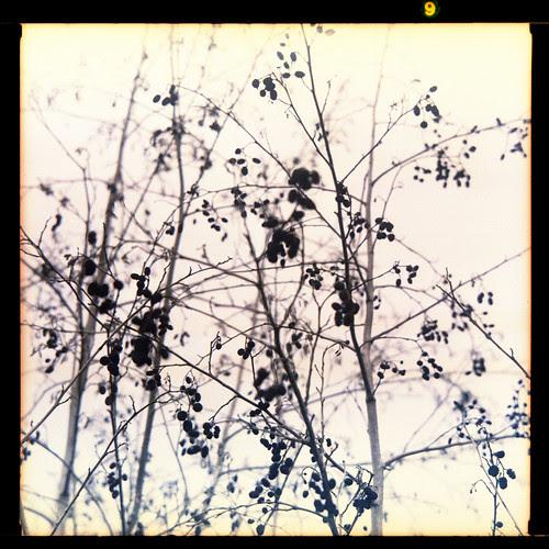 winter foliage by pho-Tony