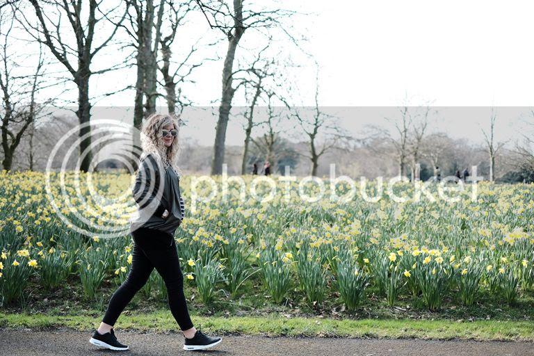 photo daffodil field _zps7qblruxm.jpg