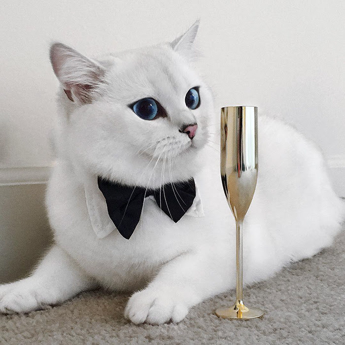 Ce Chat A Les Plus Beaux Yeux