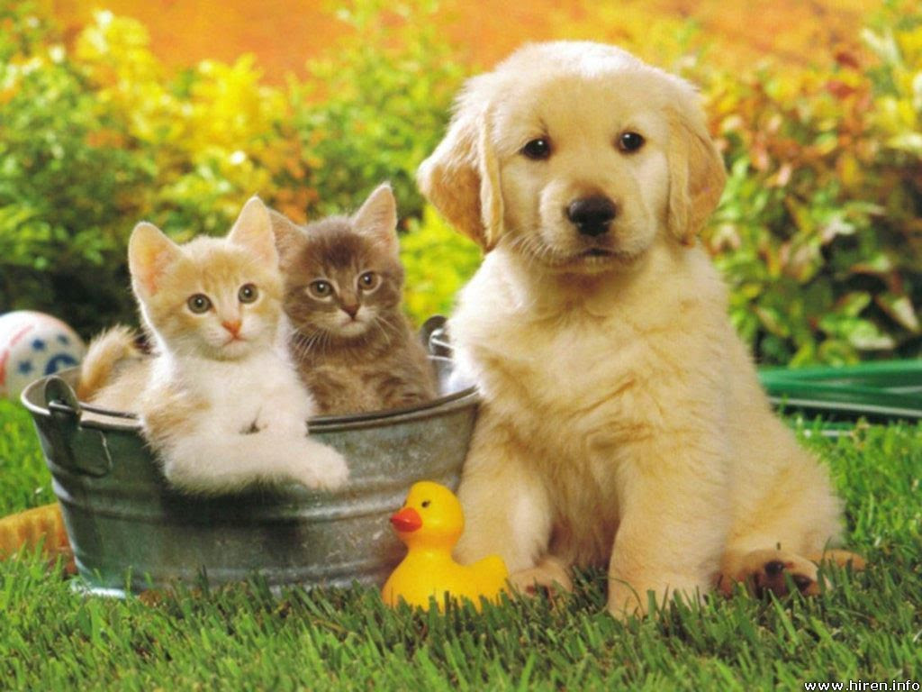 Lovely babies  Babies Pets and Animals Wallpaper 16771666  Fanpop