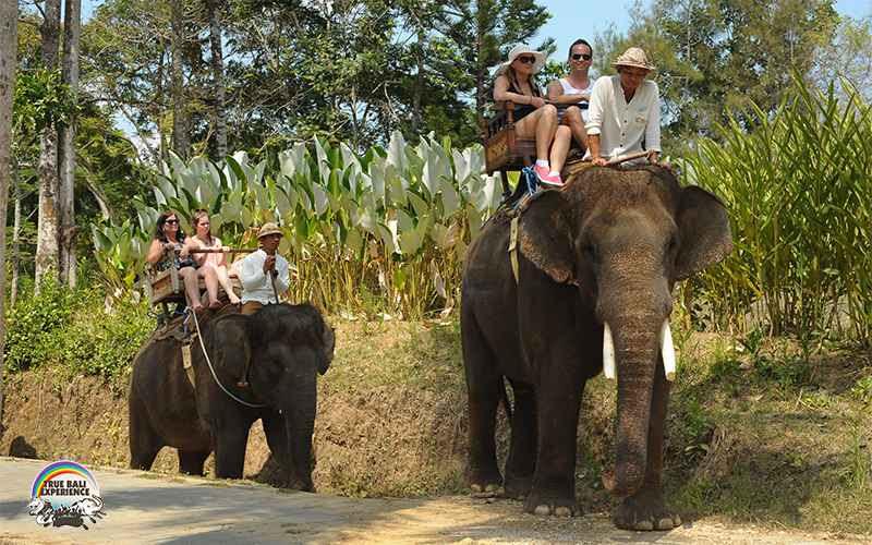 bali_elephant_camp1