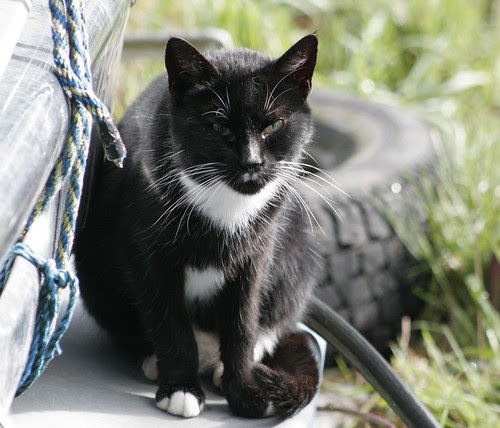 Tuxedo Cat with Milk Mustache x-ray Hitler
