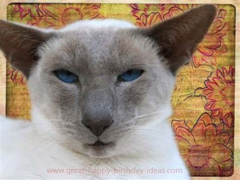 Funny Cat Birthday Wishes. Free Birthday Wishes eCards