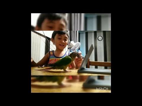 Niño jugando y haciendo trucos con su pájaro mascota