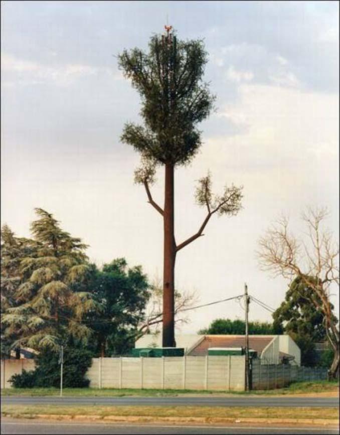 Νομίζετε πως πρόκειται για ένα δένδρο; Κοιτάξτε πιο προσεκτικά... (5)