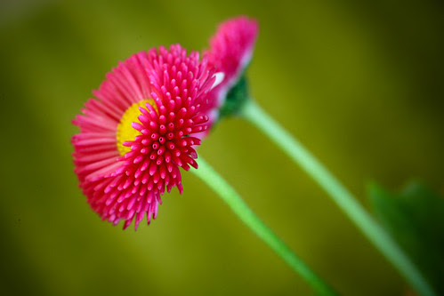 Tiny, cheerful flower