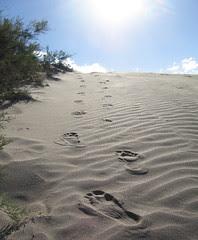 Pisadas - Footsteps