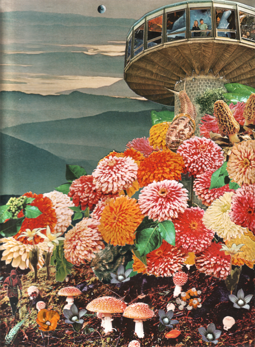 """I love this picture. It shows technology—our homes and electronics—in the middle of a field of flowers and wild mushrooms. The field would look prettier and much more peaceful without the house and people marring the scenery. Life is becoming too crowded with stuff.  """"Fruits of Our Youth""""byAlana Questell   -"""