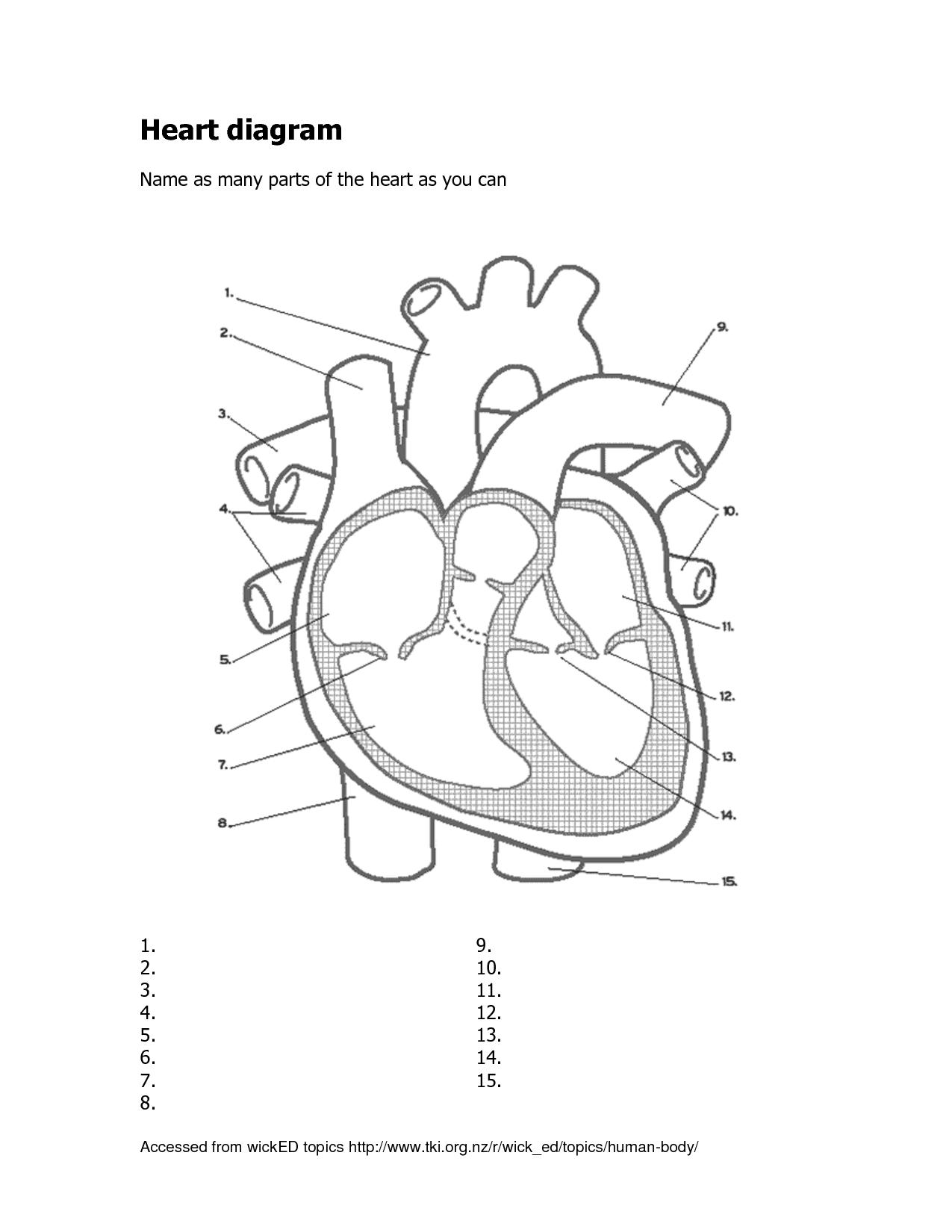 Label The Heart Diagram - Human Anatomy