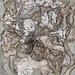 藏葉落白-23,4F,複合媒材,2011