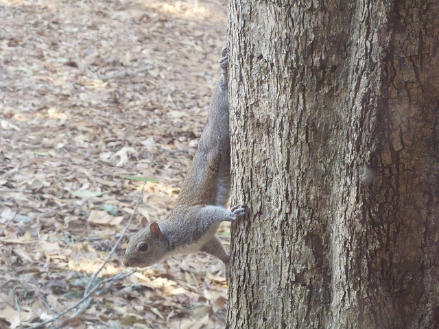Nilla and the Squirrel 0010
