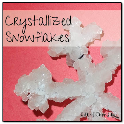 Crystallized snowflakes - these beautiful snowflakes make a great winter craft AND they double as a science demonstration || Gift of Curiosity
