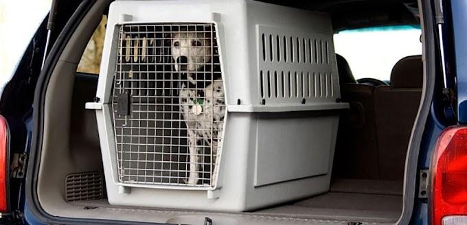 Transportín para perros, lo que debes saber