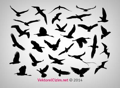 Vektörel çizim Uçan Kuşlar