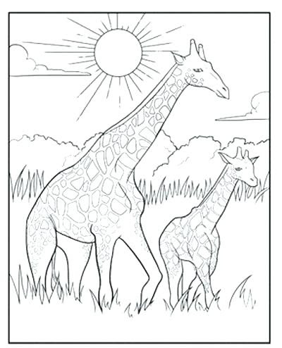 coloring pages for adults giraffe at getdrawings  free