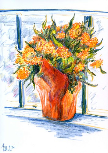 August 2011: Strawflowers - Pencil