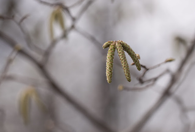 catkins group