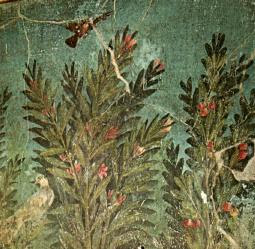 File:Pompei-cubflor1-piccolo.JPG