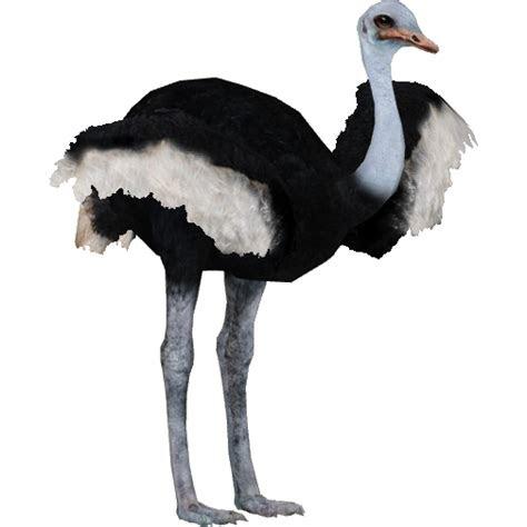 ostrich animal png images  alpha transparent