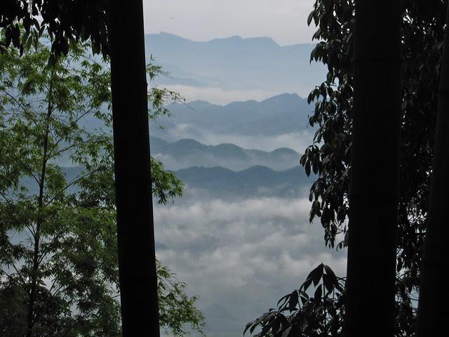 Bamboo Sea, Sichuan