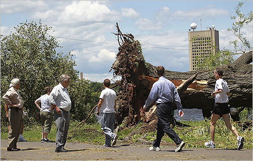 People stopped to marvel at the downed trees while walking along the river.