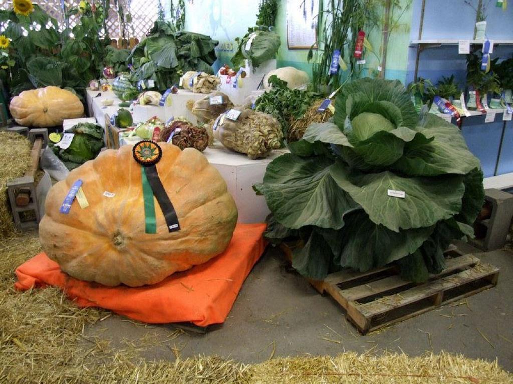 Você sabe por que os vegetais do Alasca são gigantescos? 02