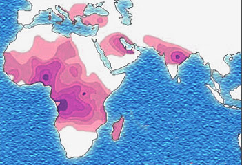 Sickle cell distribution.jpg