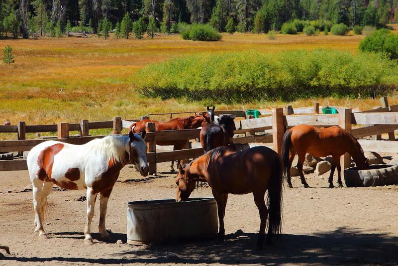IMG_7739 Horseback Riding to Corral Meadow, Lassen Volcanic National Park
