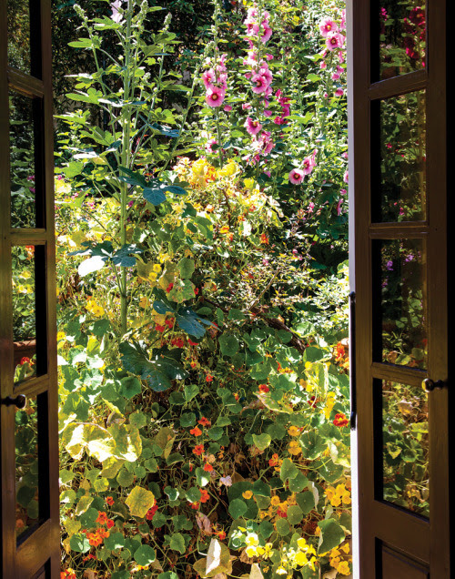 Hollyhocks and Nasturtiums