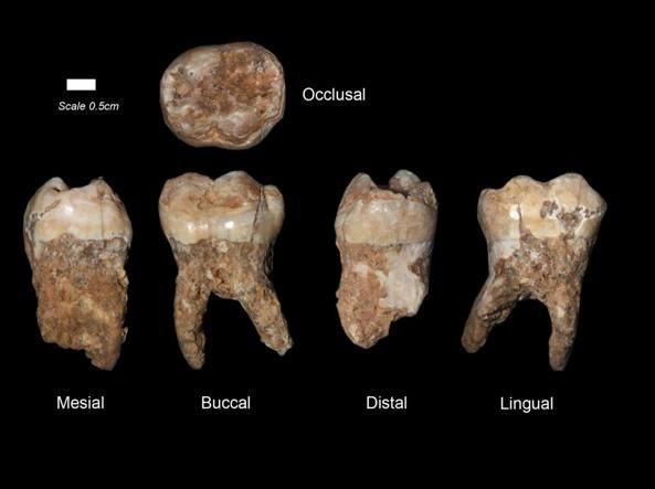 I denti ritrovati nella grotta di di Kessem a Rosh Haayin (I. Hershkovitz/Università di Tel Aviv)