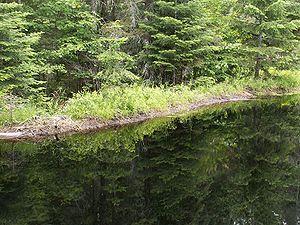 Beaver dam in Algonquin Provincial Park in Ont...