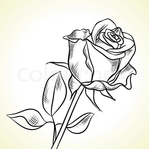 Gambar Bunga Ros Hitam Putih Kata Kata Bijak