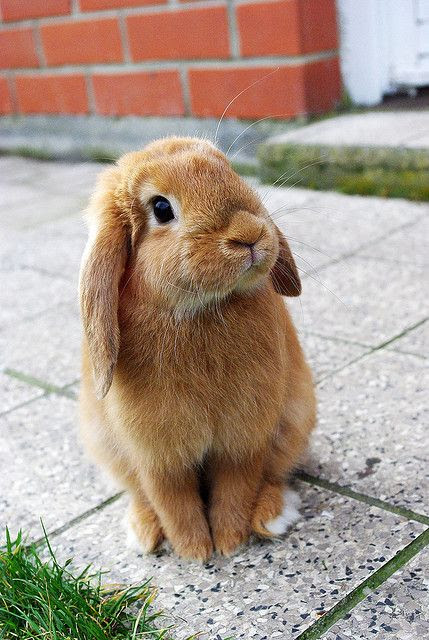 Oh my gawd, I just can't even...SO CUTE!!! <3 Aw I miss mah bunnie :(