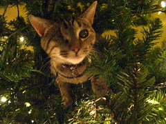 Maggie up in the Christmas tree (again and again)