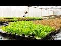 .農場到餐桌? 都市農業? 當地特產? – TAPKIT 水培法