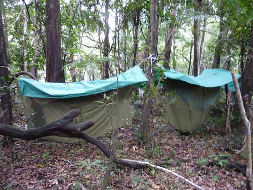 Nos chambres avec vue sur la jungle