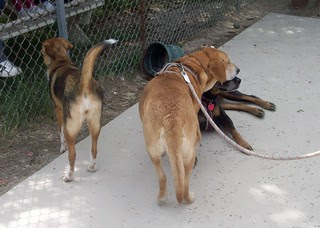 HarperSophieLola_dogpark_42912