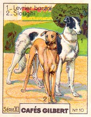 gilbert chiens011