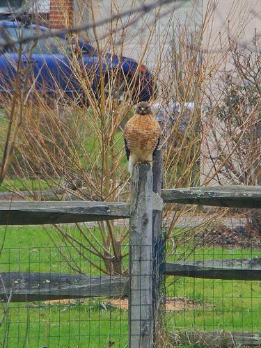 RSHA on back fence