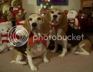 photo Shiloh_Shasta_Christmas2013_1.jpg