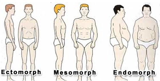 About Body Types