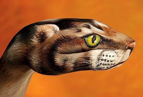 Gatto grigio - Sigla televisiva per Animal Planet Discovery 2006 (Guido Daniele)
