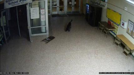 Τρία ελάφια μπήκαν σε γυμνάσιο σπάζοντας τις πόρτες