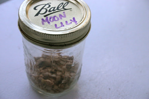 Moon Lily Seeds
