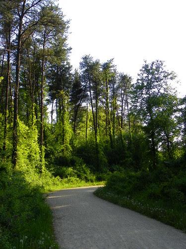 5.9.2010 Waterfall Glen Forest Preserve (33)