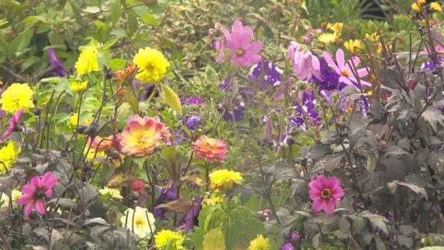 Flowers in Farmopolis